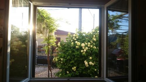Vue de la fenêtre rdc